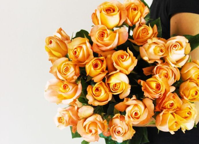 Light orange roses